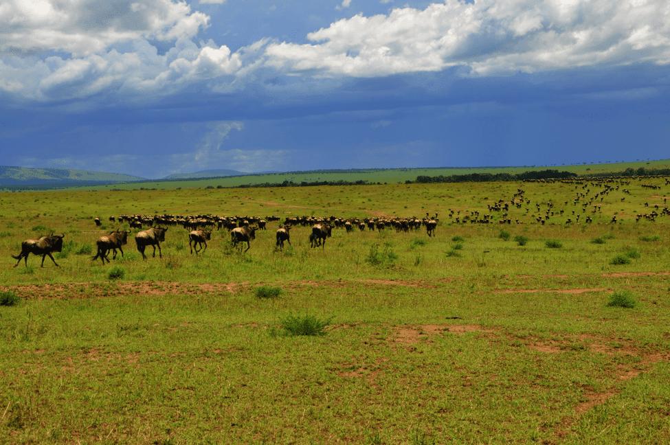 Kenya Travel 3