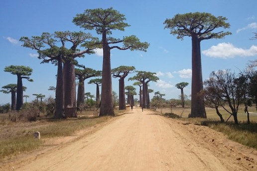 Madagascar Island ange-colonna