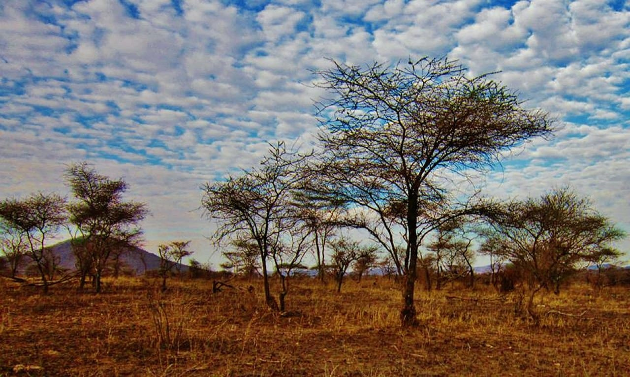 Tanzania Travel Guide 2