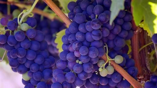 South African Wine Cabernet Sauvignon
