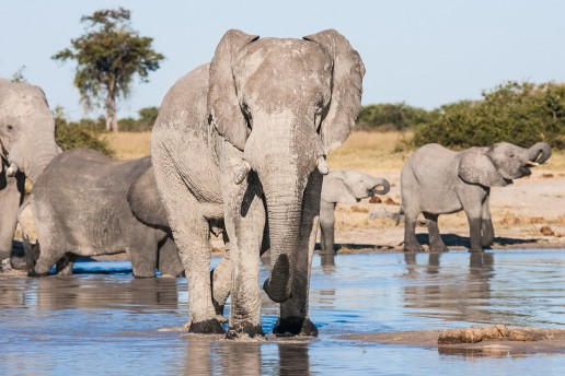 Botswana Travel Guide Image_1