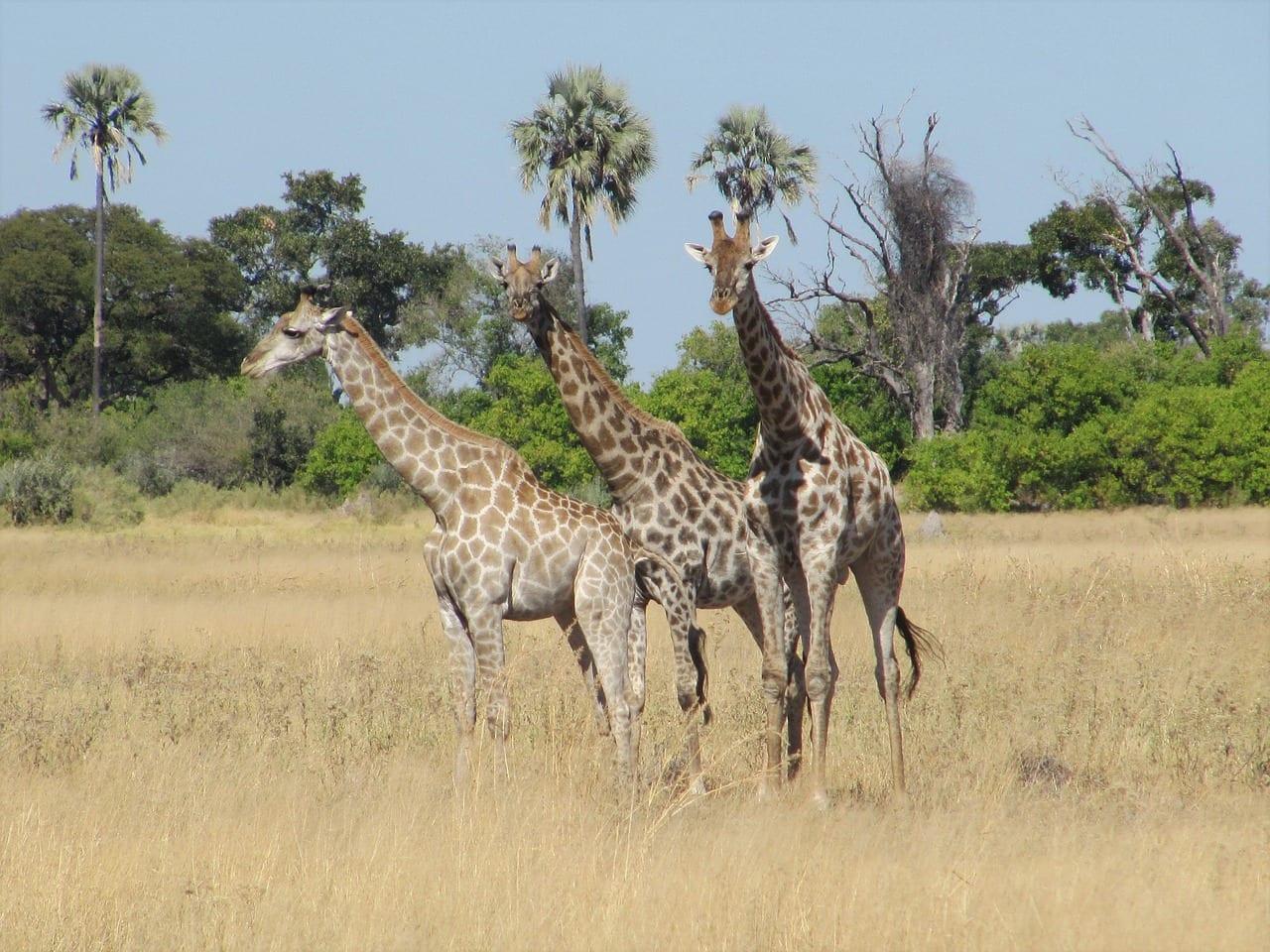 Botswana Travel Guide Image 5