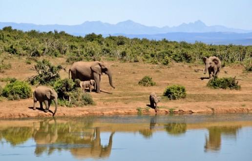 Honeymoon in Africa Picture4