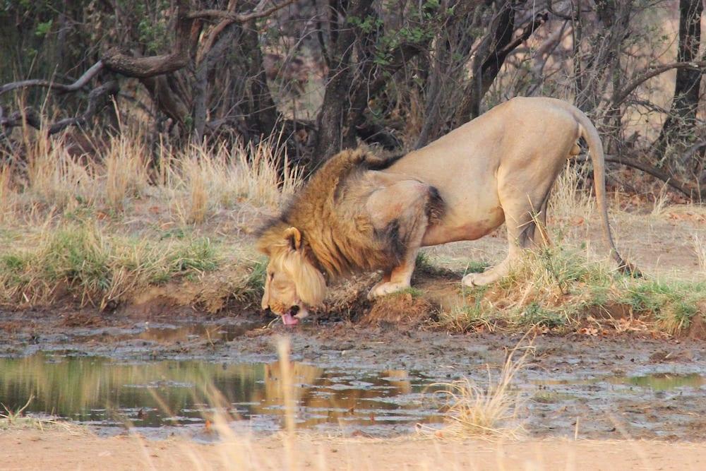 Johannesburg in One Day Johannesburg Wildlife