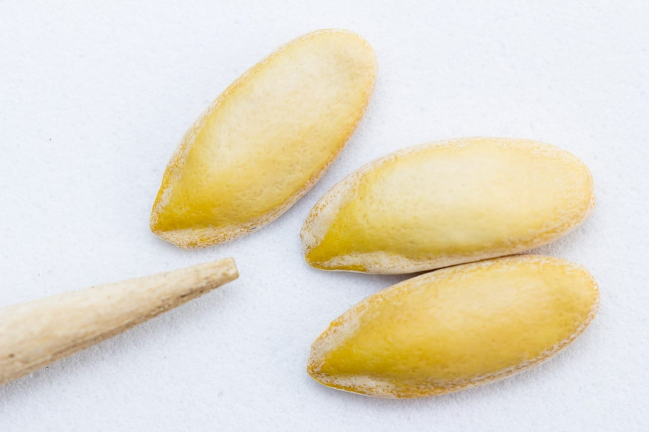 basic ingredients Egusi