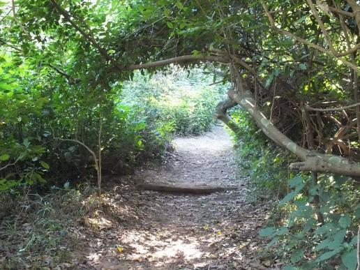 A Burman Bush Walking Trail in Durban