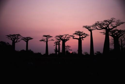 Luxury Getaway Belo Sur Mer Madagascar baobabs