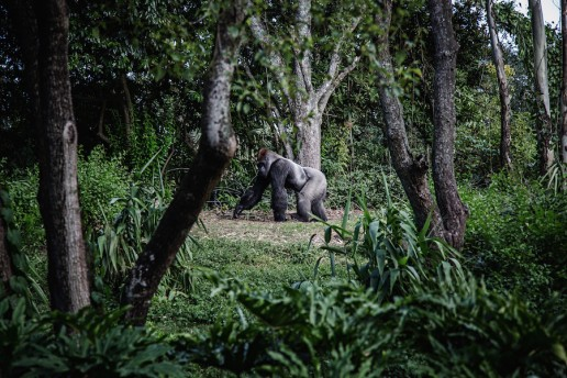 Luxury Getaway Bwindi Gorilla