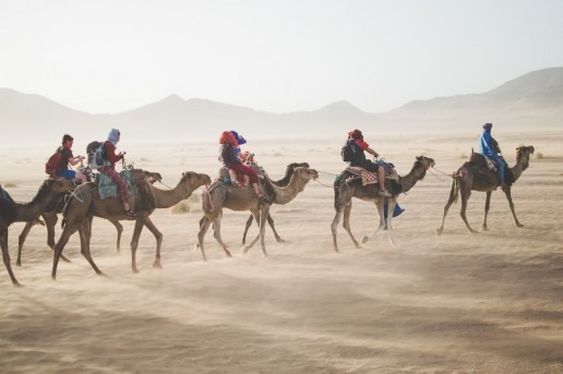 Luxury Getaway camels