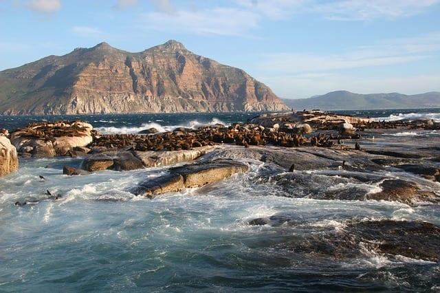 Dangerous Sharks South Africa seals