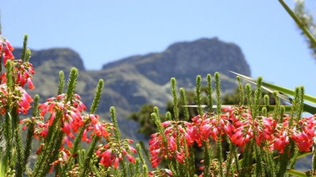 kirstenbosch Featured