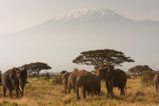 kilimanjaro elephants 640x360