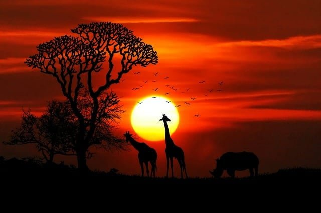 Visit to Africa Sun Giraffe