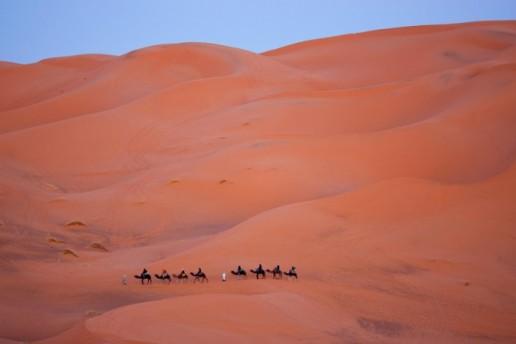 Morocco Erg Chebbi Camel
