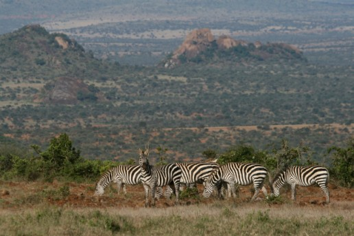 Nomads And National Parks: A Guide To Northern Kenya