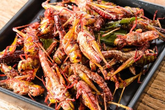 Edible African Bugs fried crickets african 640x360