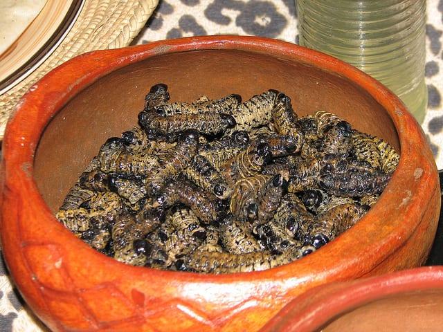 Edible African Bugs mopane worms