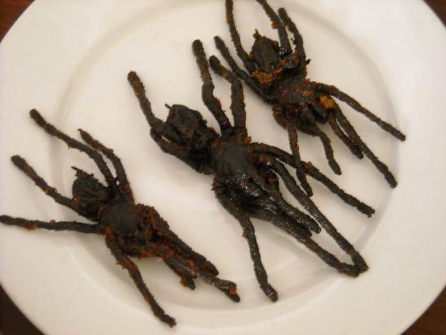 Edible African Bugs tarantula