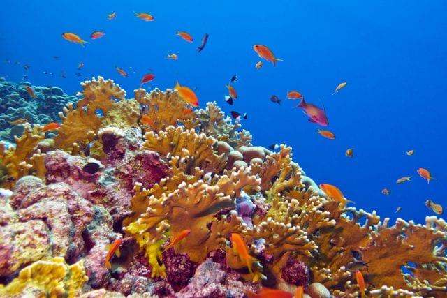 Quirimbas coral reef e1534811343922
