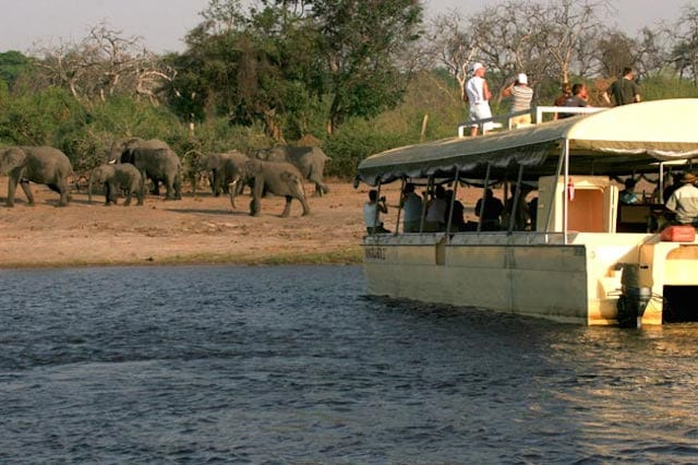 15 Things To Do In Botswana For The Whole Family Chobe River Boat Cruises in botswana