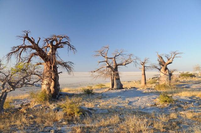 15 Things To Do In Botswana For The Whole Family Kubu Island in botswana