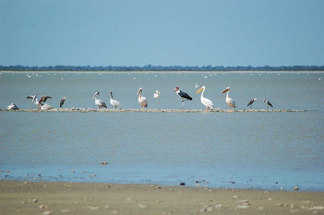 15 Things To Do In Botswana For The Whole Family Nata Bird Sanctuary Botswana