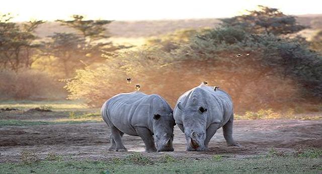 15 Things To Do In Botswana For The Whole Family khama rhino sanctuary in botswana