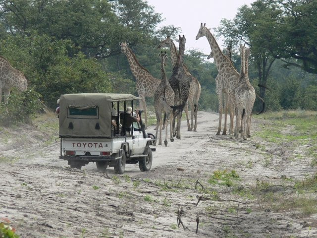 15 Things To Do In Botswana For The Whole Family odirile safari in botswana