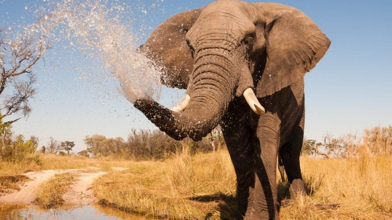 15 Things To Do In Botswana For The Whole Family