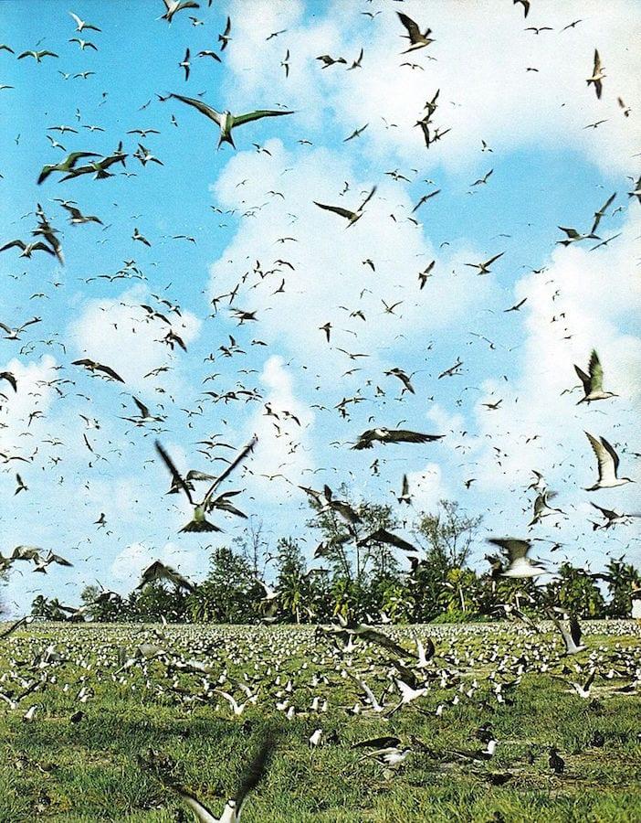 Seychelles Travel Guide Bird flocks Bird Island Seychelles