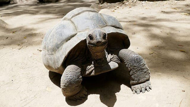 Seychelles Travel Guide turtle