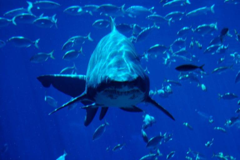 durban shark ushaka 768x511